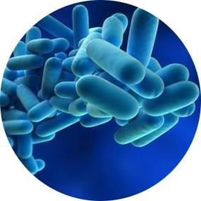 simulazione_batteri